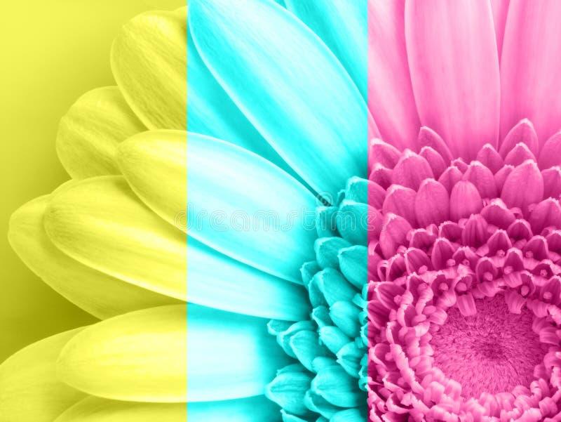 Belle fleur rose de gerbera en macro plan rapproché Couleur en pastel Papier peint, fond, bureau, couverture photographie stock libre de droits