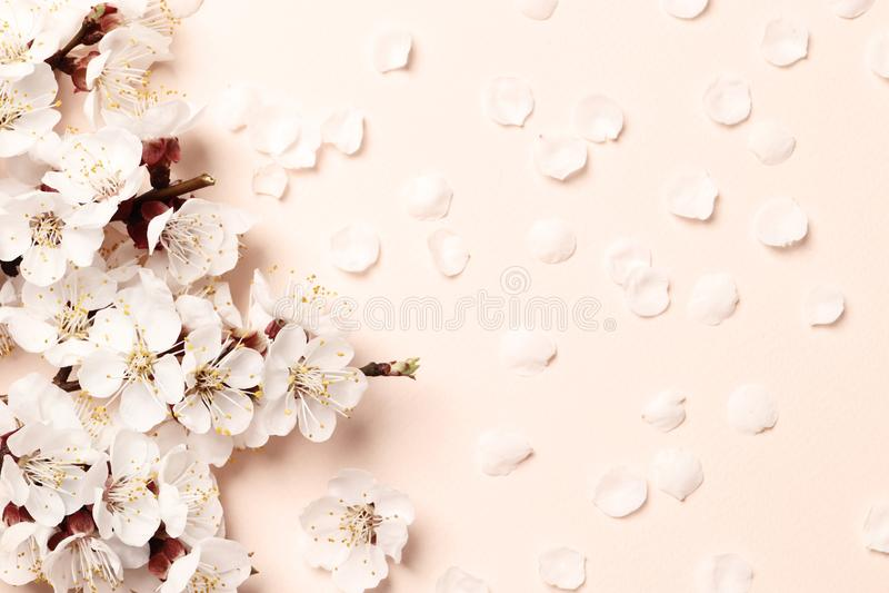 Belle fleur rose de pêche image stock
