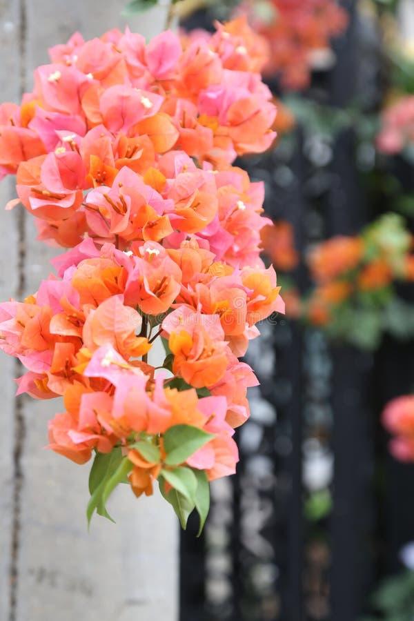 Belle fleur rouge photo stock