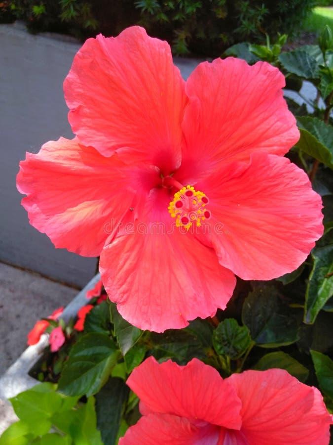 Belle fleur sur le soleil d'été image libre de droits