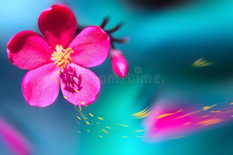 Belle fleur tropicale rose contre le feu bleu et vert Fond tropical naturel d'été Macro de plan rapproché Sélectif et doux image stock