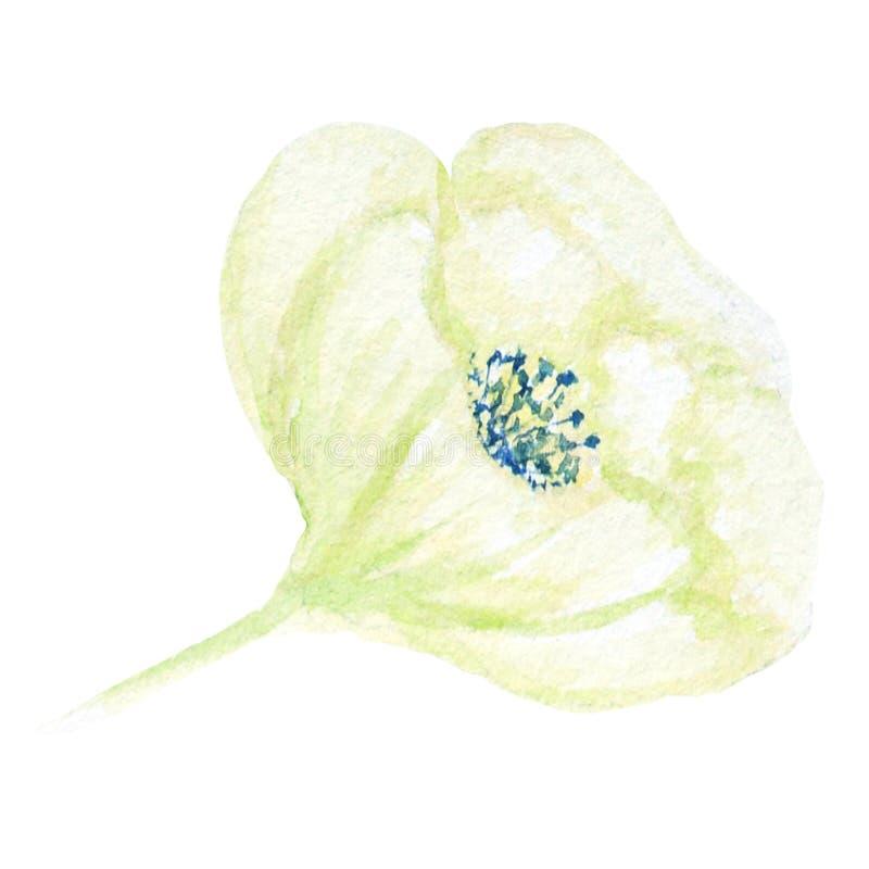 Belle fleur verte blanche d'aquarelle D'isolement sur le fond blanc illustration libre de droits