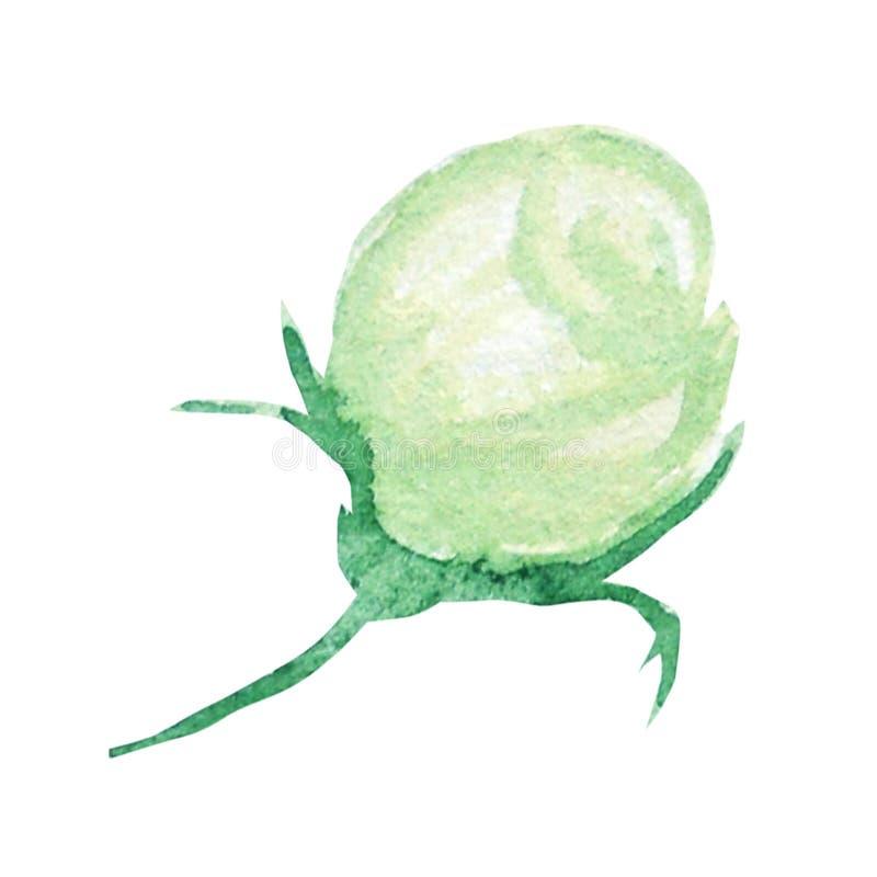 Belle fleur verte blanche d'aquarelle D'isolement sur le fond blanc illustration de vecteur