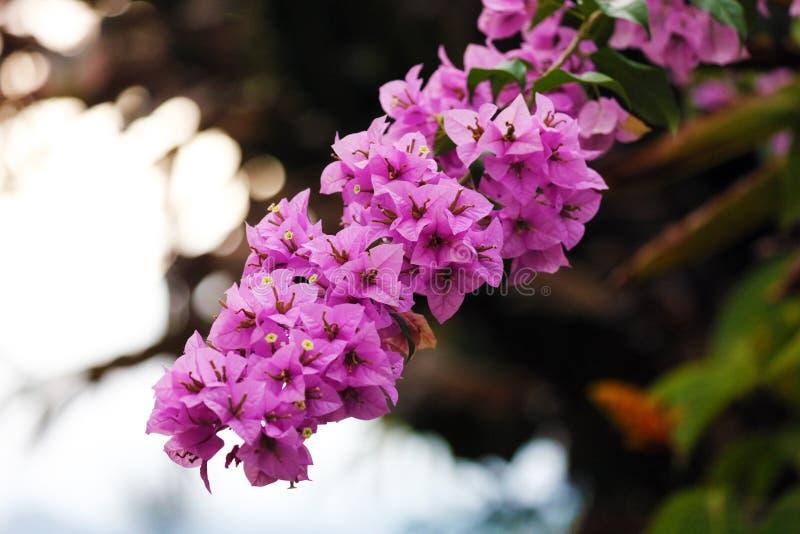 Belle Fleur Violette, Fleur Magnifique D'usine Dans La ...