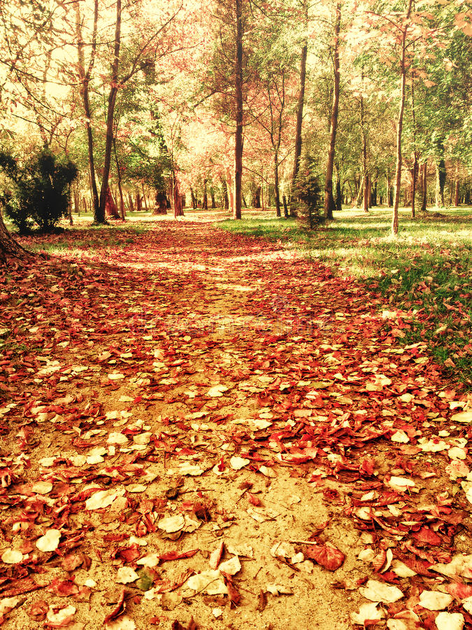 Belle foglie di autunno in percorso del parco fotografie stock