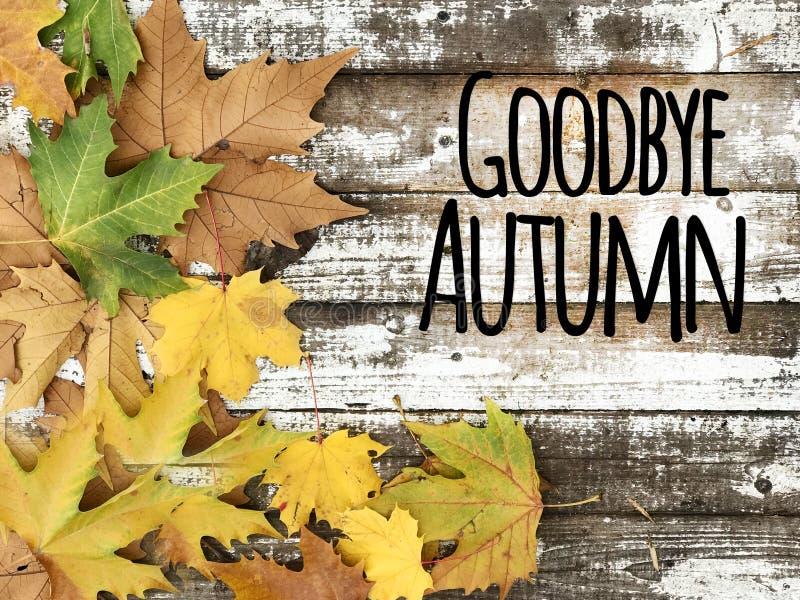 Belle foglie di autunno su un fondo di legno bianco immagine stock libera da diritti
