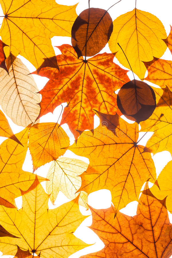 Belle foglie di autunno variopinte della raccolta fotografia stock libera da diritti