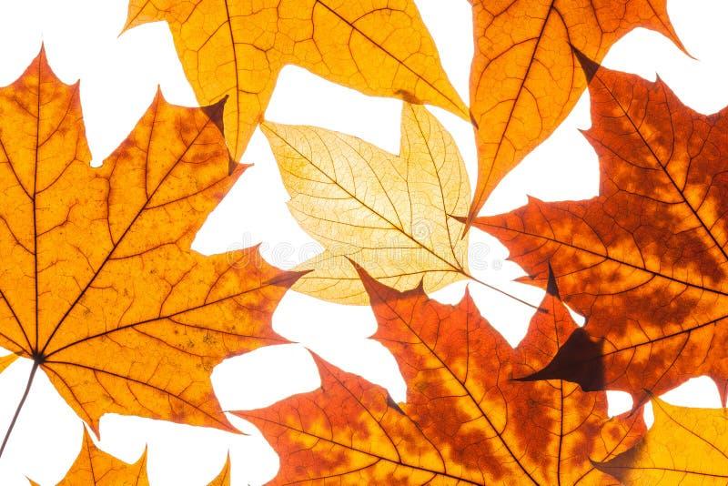 Belle foglie di autunno variopinte della raccolta fotografie stock libere da diritti