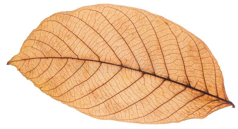 Belle foglie di autunno variopinte della raccolta immagini stock libere da diritti