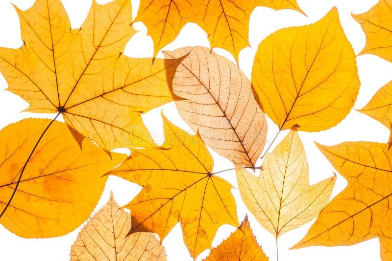 Belle foglie di autunno variopinte della raccolta immagine stock libera da diritti