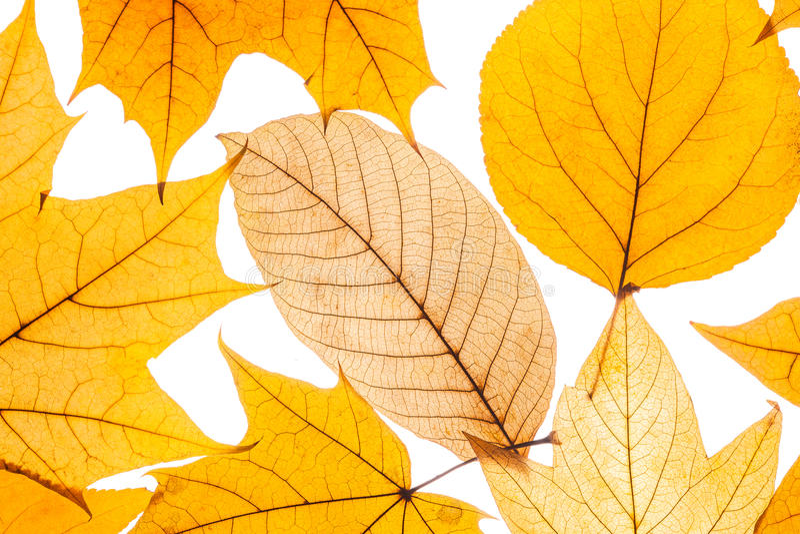 Belle foglie di autunno variopinte della raccolta fotografia stock