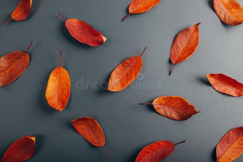 Belle foglie di rosso su carta grigia Priorità bassa astratta di autunno fotografia stock