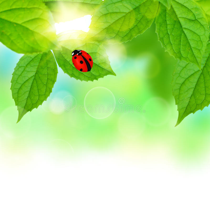 Belle foglie di verde immagine stock libera da diritti