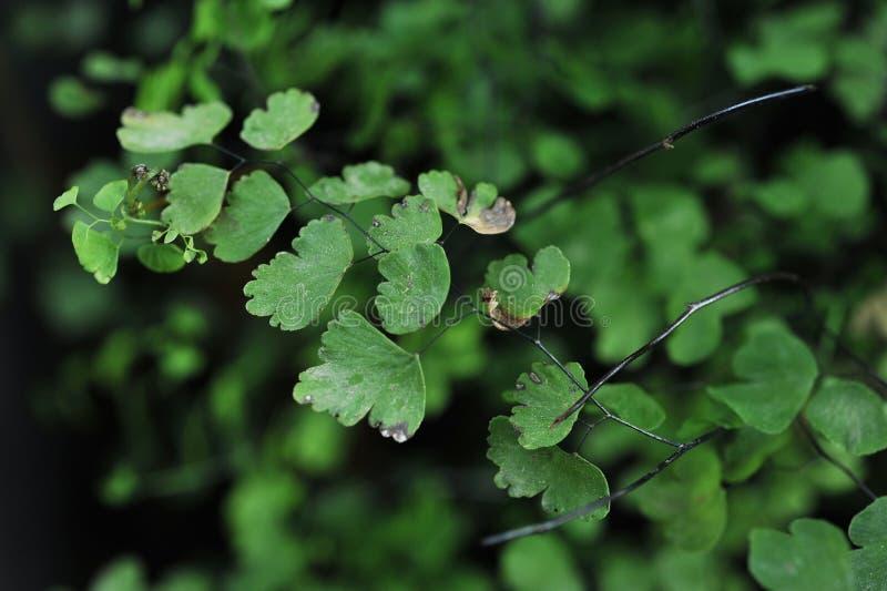 Belle foglie verdi di migliore veiw delle piante per il fondo del sito Web fotografia stock