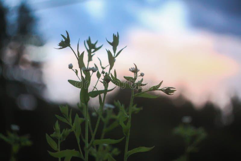 Belle foglie verdi nel parco di estate fotografie stock