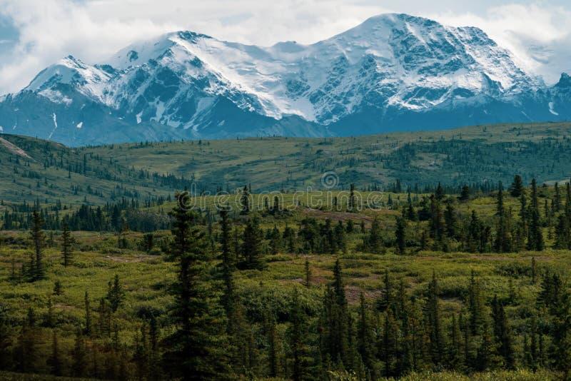 Belle forêt boréale le long de Richardson Highway en Alaska images stock