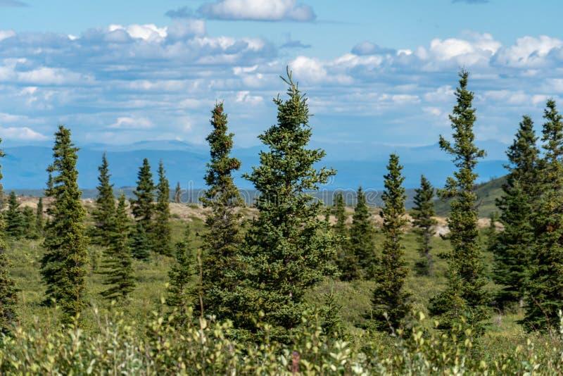 Belle forêt boréale le long de Richardson Highway en Alaska image libre de droits