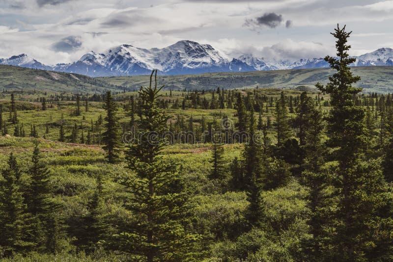 Belle forêt boréale le long de Richardson Highway en Alaska avec les montagnes couronnées de neige images stock