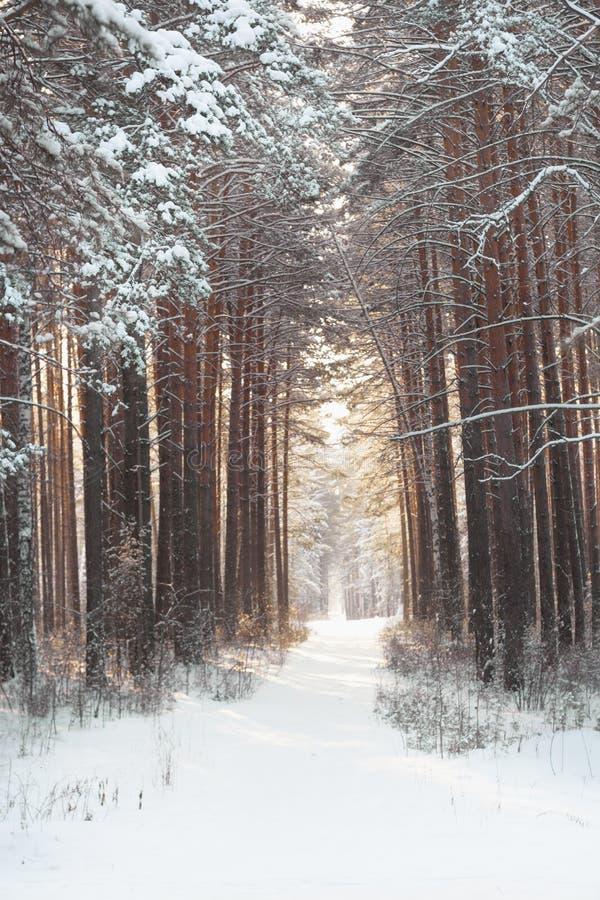 Belle forêt d'hiver et la route photographie stock