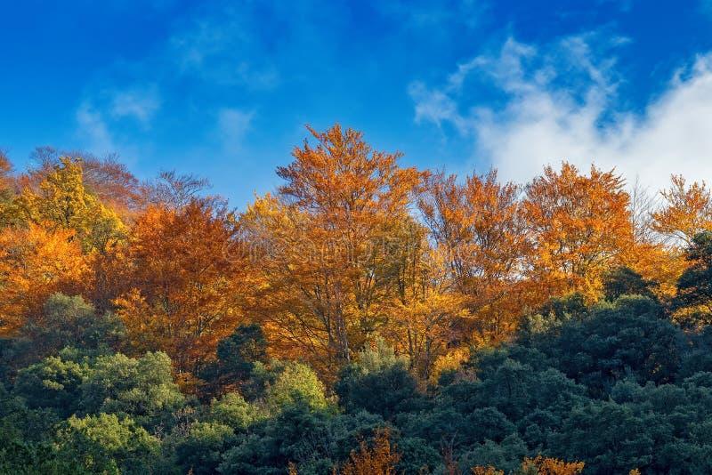 Belle forêt de hêtre en automne près de ville Olot en Espagne, sèche de La photographie stock