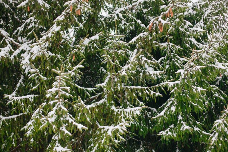 Belle forêt de l'hiver photos libres de droits