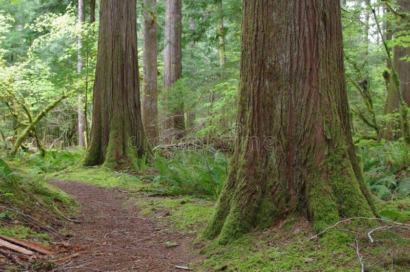 Belle forêt de nord-ouest Pacifique images libres de droits