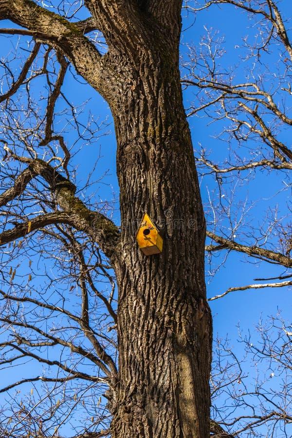 Belle forêt de volière au printemps sur un haut arbre contre le ciel bleu Jour ensoleillé de source photo libre de droits