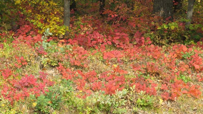 Belle forêt en automne photo libre de droits