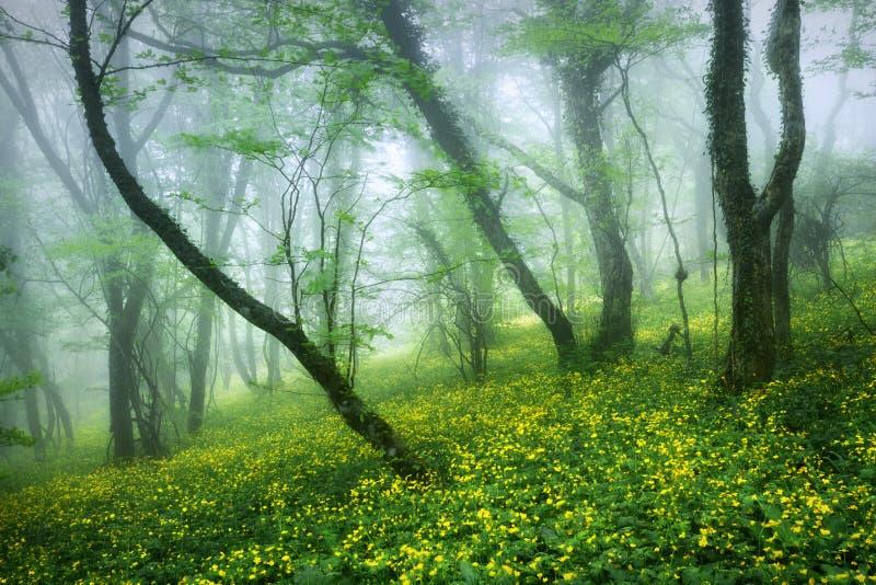 Belle forêt mystérieuse en brouillard avec des feuilles et le jaune de vert images stock