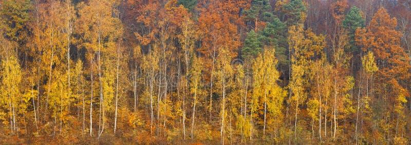 Belle forêt orange, rouge et verte d'automne, beaucoup d'arbres sur le panorama orange de collines Bannière de Web de panorama de photo stock