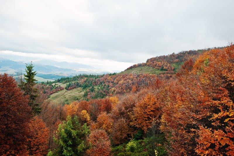 Belle forêt orange, verte et rouge d'automne de forêt d'automne, mA photographie stock libre de droits