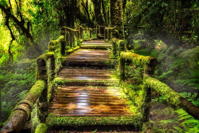Belle forêt tropicale à l'itinéraire aménagé pour amateurs de la nature de ka d'ANG image stock