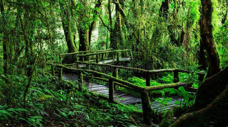 Belle forêt tropicale à l'itinéraire aménagé pour amateurs de la nature de ka d'ANG photos libres de droits