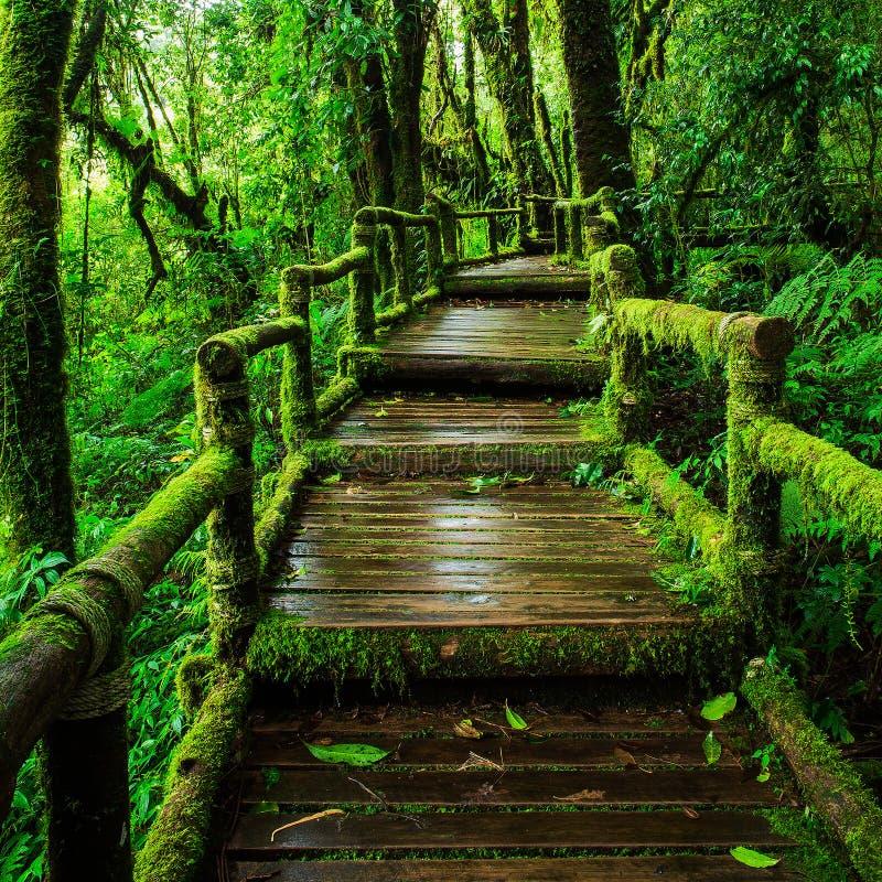 Belle forêt tropicale à l'itinéraire aménagé pour amateurs de la nature de ka d'ANG photographie stock libre de droits