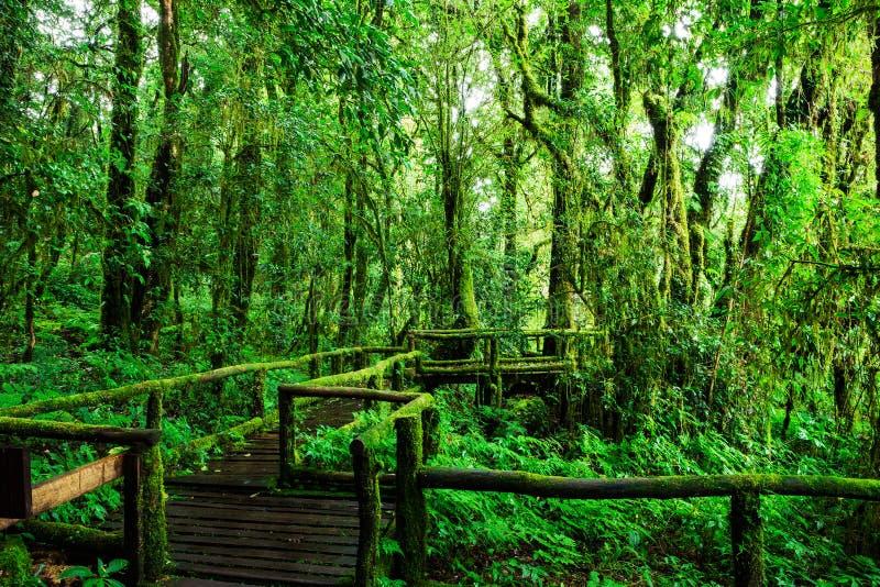 Belle forêt tropicale à l'itinéraire aménagé pour amateurs de la nature de ka d'ANG photos stock