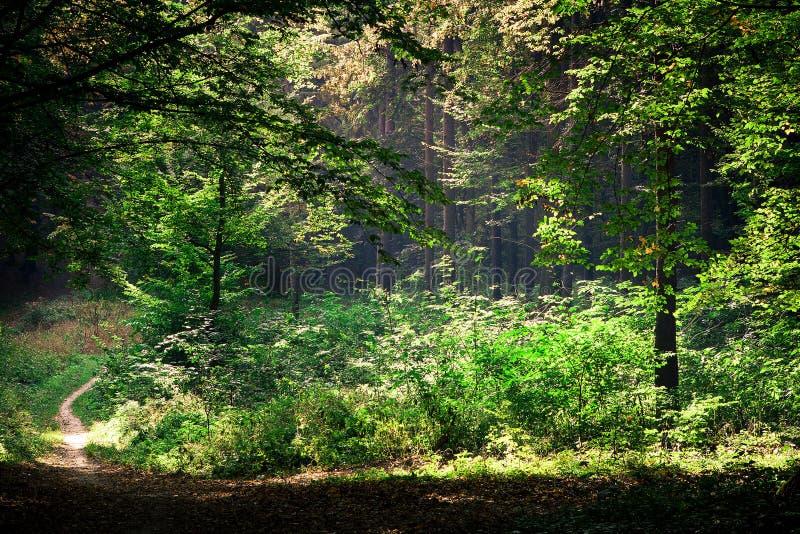 Belle forêt verte image stock