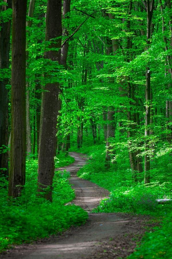 Belle forêt verte photo libre de droits