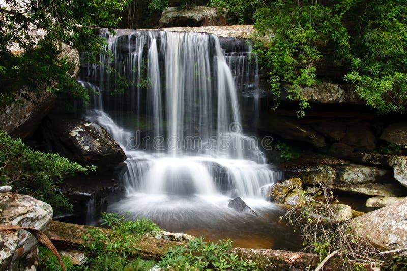 Belle foresta pluviale e cascata immagine stock libera da diritti
