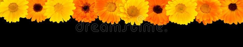 Belle frontière de dessus de fleur pour la conception photographie stock libre de droits