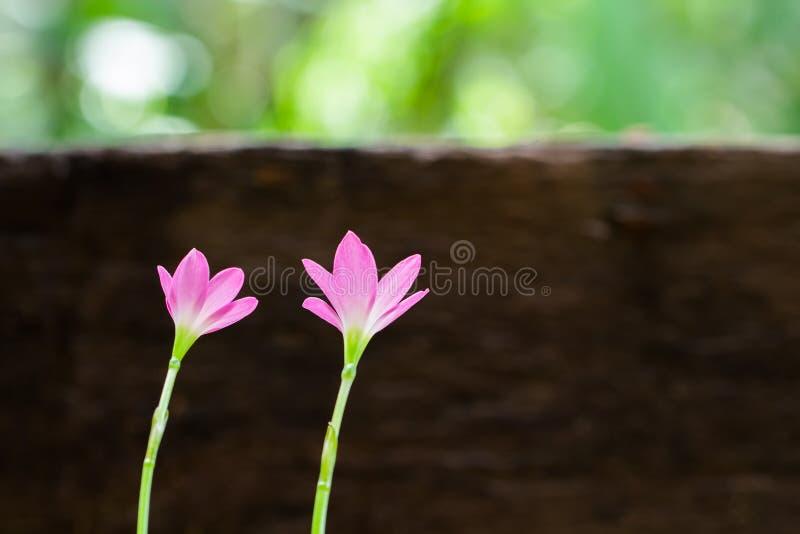 Belle frontière de fleurs au-dessus de blanc photos libres de droits