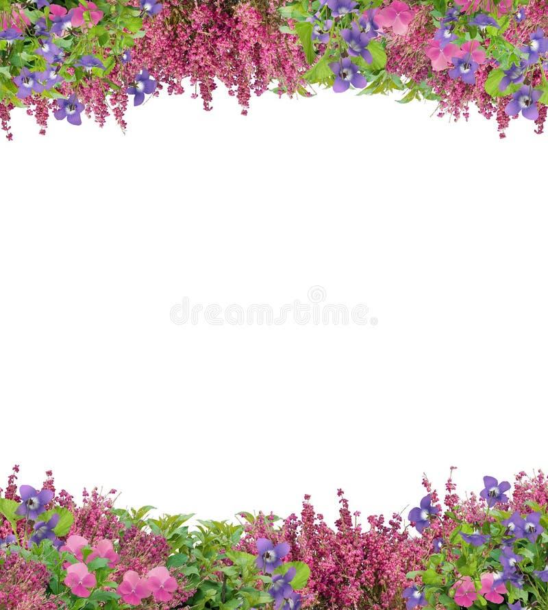 Belle frontière des fleurs de ressort image stock