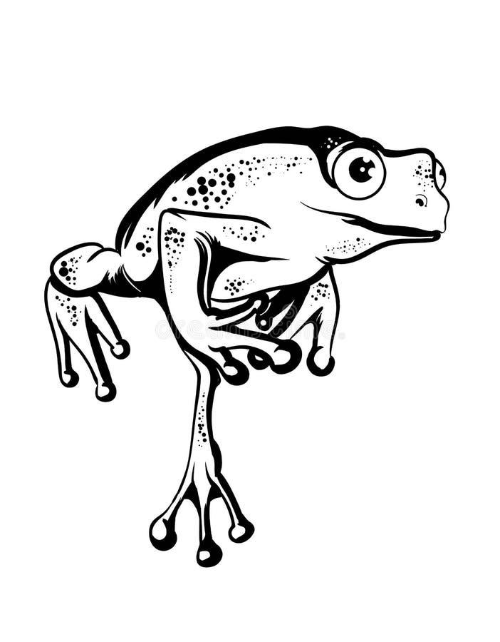 Belle grenouille image stock
