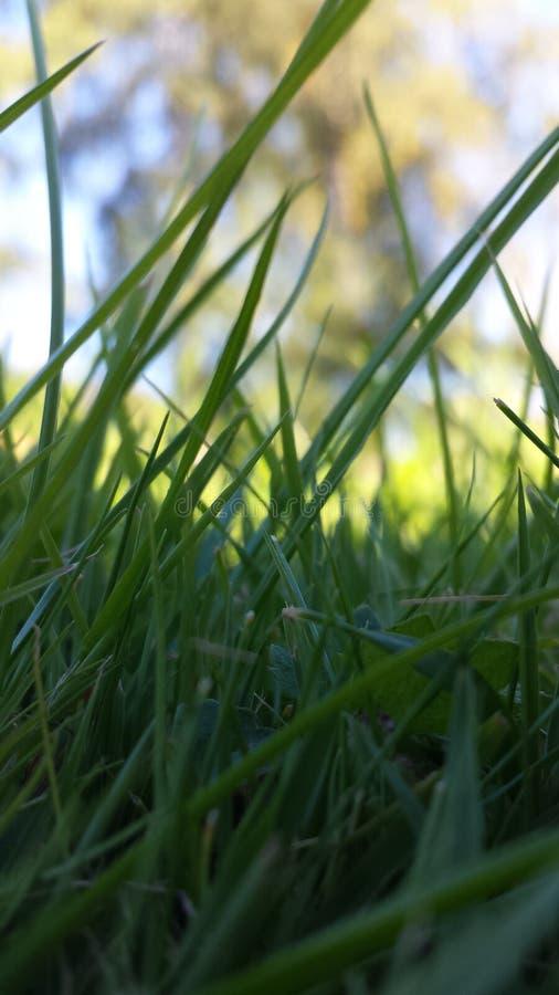 Belle herbe photo libre de droits