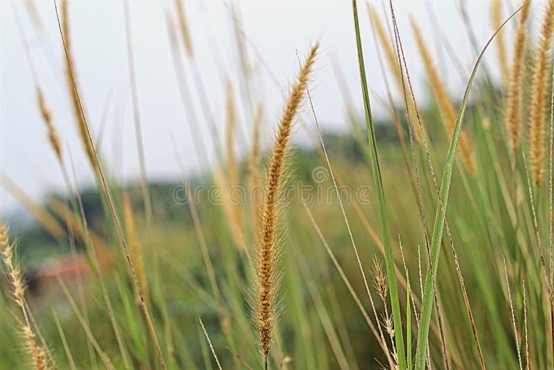 Belle herbe sur la cour quand éclat du soleil photos stock