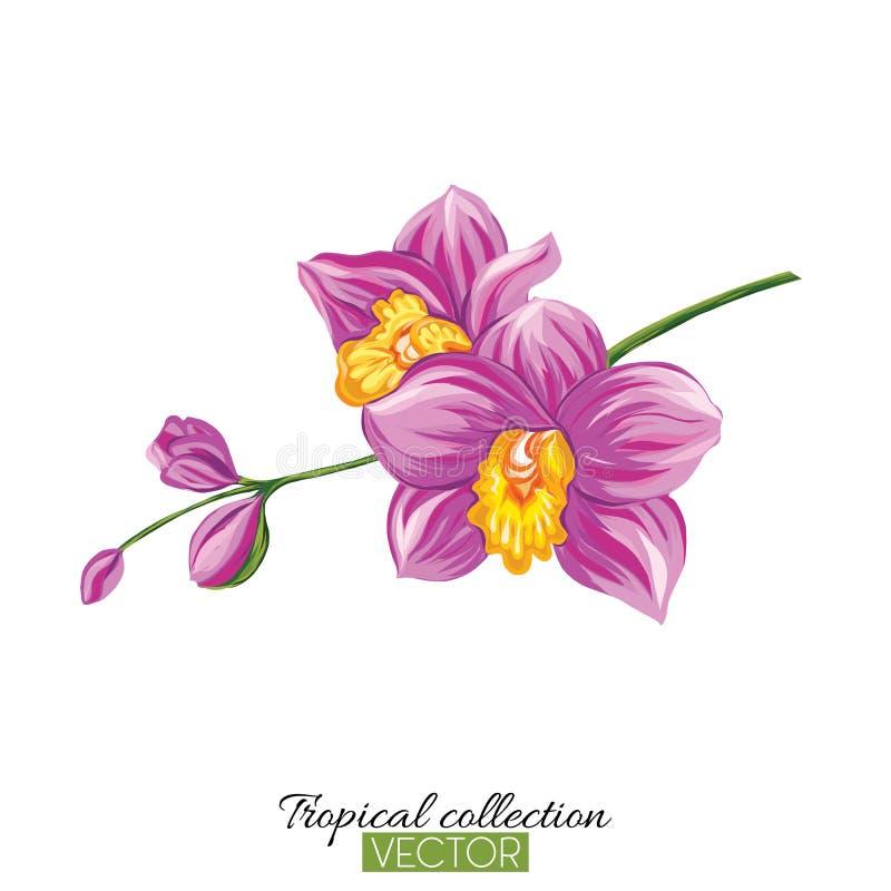 Belle illustration botanique tirée par la main de vecteur avec l'orchidée illustration libre de droits