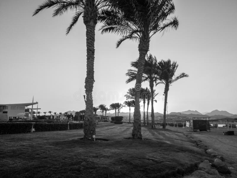 Belle image noire et blanche de longue all?e avec la paume croissante sur le chemin de bord de la mer ? la plage images libres de droits