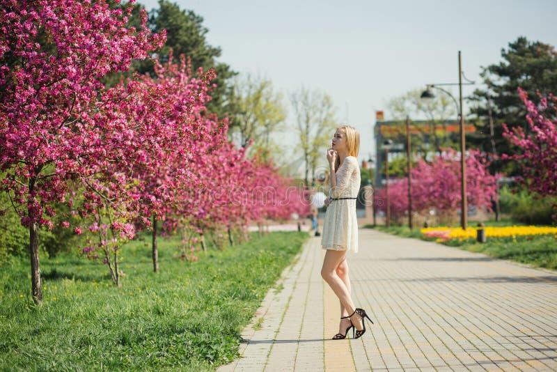 Belle jeune femme blonde dans la robe blanche marchant au parc de ressort avec les cerisiers roses images stock