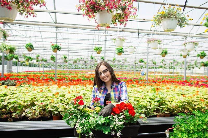 Belle jeune fille de sourire en verres, ouvrière avec des fleurs en serre chaude Travail de concept en serre chaude Copiez l'espa images libres de droits