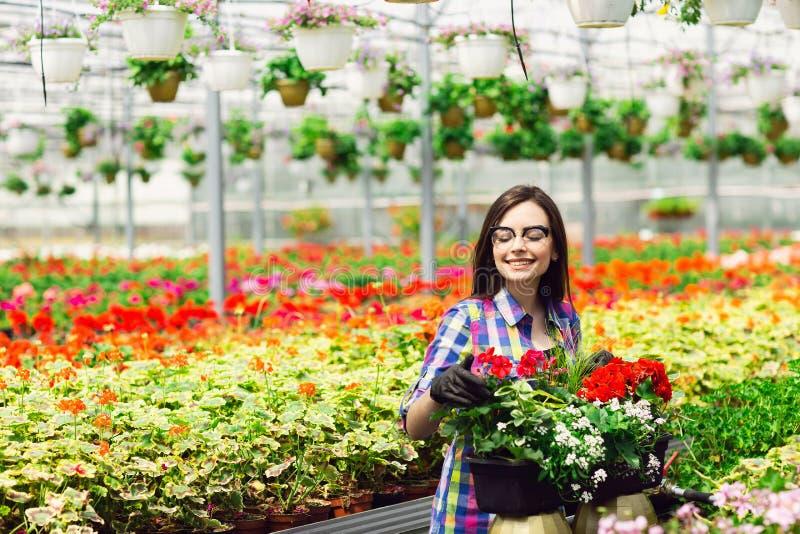 Belle jeune fille de sourire en verres, ouvrière avec des fleurs en serre chaude Travail de concept en serre chaude Copiez l'espa photographie stock libre de droits