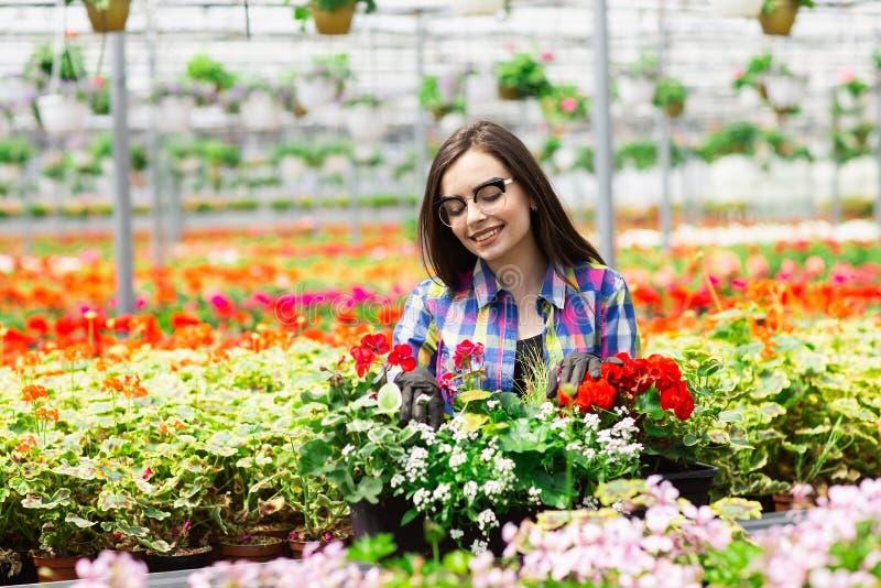 Belle jeune fille de sourire en verres, ouvrière avec des fleurs en serre chaude Travail de concept en serre chaude Copiez l'espa image stock